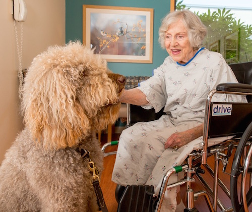Porter, pet therapy dog with patient